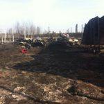 В Вышгородском районе подожгли приют для собак, заживо сгорело 70 животных