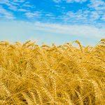Украина: проблемы Урожая-2015