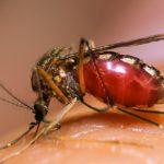 Наиболее опасными для жизни человека оказались комары и сами люди