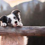 Куда исчез участок под приют для бездомных животных?