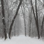 Точный прогноз погоды на зиму. Какой ожидается зима 2016 — 2017 в Украине?