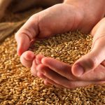 Африка делает ставку на украинское зерно