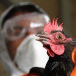 В Германии и Швеции зафиксированы новые случаи птичьего гриппа
