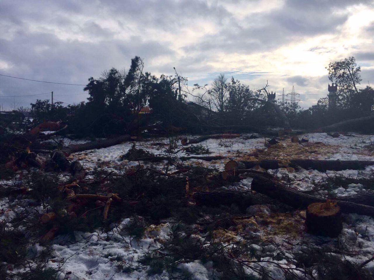 вырубка леса 2