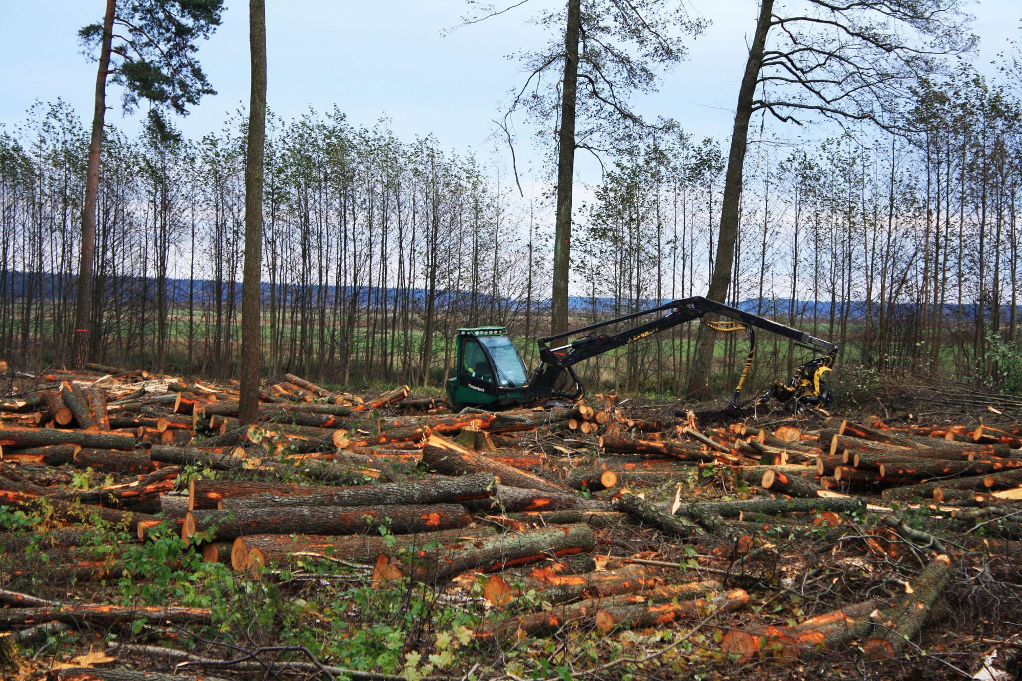 Выделение леса на строительство дома в нижегородской области примеру, никак