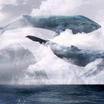 Почему Польша играет в «Синий кит»?