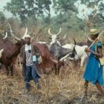 В центре Нигерии обнаружили тела более 80-ти человек