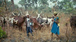 Пастухи в Нигерии