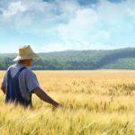 Комитет по вопросам аграрной политики поддержал выделение 8,4 млрд гривен на поддержку аграриев