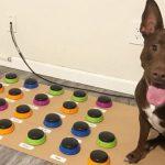 Говорящая собака из США: логопед научила ее общаться с помощью кнопок со словами