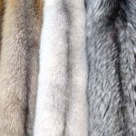 В Киевской области за 50 секунд похитили меха на 130 тыс гривен
