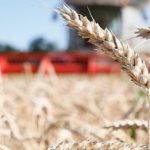 Производство зерновых культур в 2019 году составит 74 млн тонн