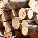 Онлайн-аукционы по продаже древесины запустят с апреля, — Гончарук