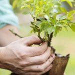 Блогеры и бизнесмены собрали 20 млн долларов на посадку деревьев