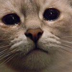 19-летняя жительница Лозовой убила собственного кота