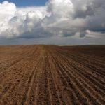 Луганская область вышла на 3 место по индексу сельхозпродукции