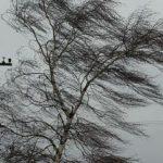 На Луганщине рассказали, как действовать во время порывов ветра