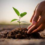 Донецкая и Луганская области могут присоединиться к всеукраинской акции «Миллион деревьев за 24 часа»