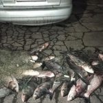 Возле Славянска задержали браконьеров с 300 кг рыбы