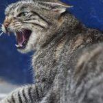 В Харькове две женщины попали в больницу из-за бешеного кота