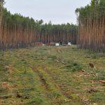 В Германии суд окончательно разрешил Tesla вырубить лес для нового завода