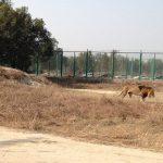 В загоне для львов в пакистанском зоопарке нашли останки 17-летнего парня