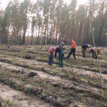 На севере Донетчины проходит высадка леса