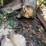 ГБР сообщило о подозрении еще четверым работникам Октябрьского лесхоза