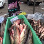 В «ДНР» рассказали о ценах на продукты