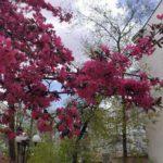 Погода в Харькове 22 апреля