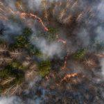 Загрязненный пожарами воздух из Чернобыльской зоны переместится в Киев