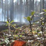 Пожар в Чернобыльской зоне удалось потушить благодаря дождю