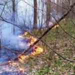 В Харьковской области число пожаров в экосистемах выросло на 70%