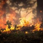 На Луганщине выгорело 27 га соснового леса: подробности