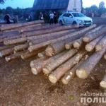 Двое мужчин спилили 18 сосен на территории заказника в Балаклейском районе (фото)