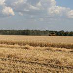 В Харьковской области собрали 2,5 млн тонн зерна нового урожая