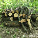В Новой Водолаге будут судить двух «черных лесорубов» за уничтожение дубов и кленов