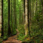 IKEA выкупила 4500 гектаров леса в США для защиты местной экосистемы