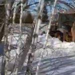 У россиян свой Суэцкий канал: загруженная луком фура перегородила трассу в Подмосковье (видео)