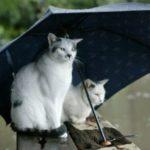 Украину накроют дожди: прогноз погоды на середину весны