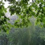 На выходных украинцев ждут грозовые дожди: прогноз погоды