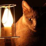 Отключение электричества за долги по коммуналке: что делать